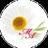横浜:女性のためのホリスティックケアサロン〜マトリカリア・アンジュ(妊活・マタニティマッサージ&マタニティ整体、妊娠中のマイナートラブル、産後の骨盤調整、更年期の体質改善、乳がんケア)